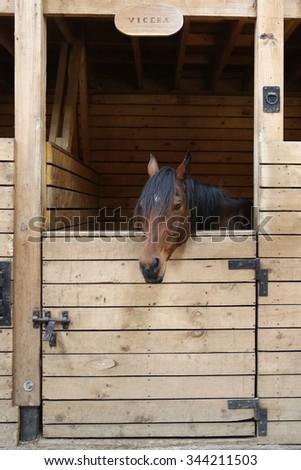 Horse in the stable door - stock photo