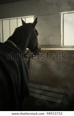 horse is in the stable in winter horsecloth and looks out the window - stock photo
