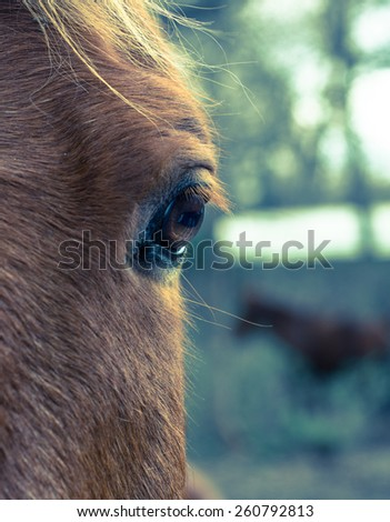 Horse left eye with shallow depth of field - stock photo
