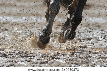 Horse legs in the dirty water  - stock photo