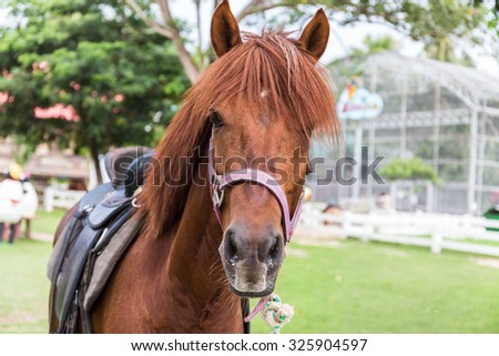 Horse live in the farm, selective focus - stock photo