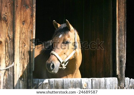 Horse Looking out From its Stalls - stock photo