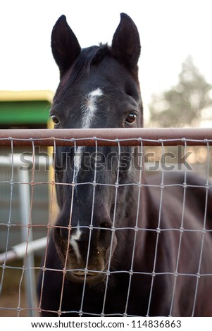 horse looking sad over fence in the camera - stock photo