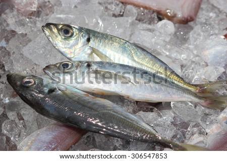 Horse mackerel - stock photo