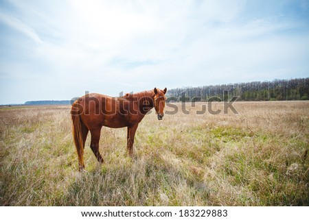 Horse on a farm field.  - stock photo
