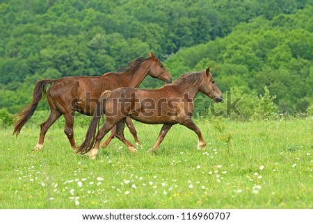 Horse on a green grass - stock photo