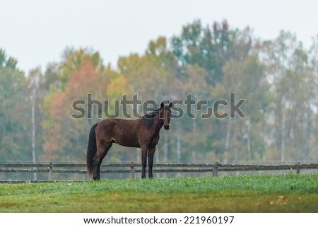 Horse on a green grass field during autumn, Sweden  - stock photo