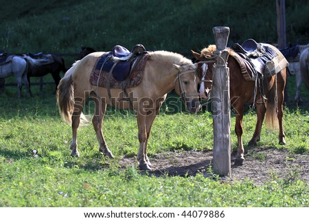 horse on a leash - stock photo