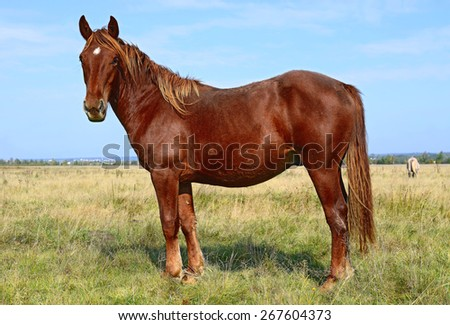 Horse on a summer pasture - stock photo