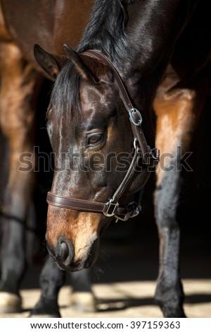 horse on black background - stock photo