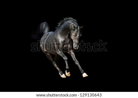horse on black isolated - stock photo