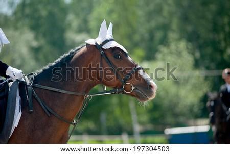 horse on dressage championship - stock photo