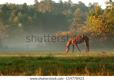 horse on fog meadow in morning - stock photo