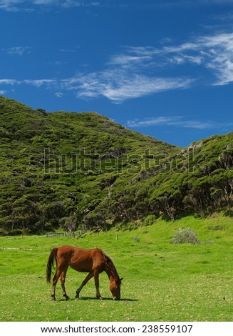 Horse on meadow, East cape, New Zealand - stock photo