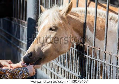 Horse on nature, portrait of a horse - stock photo