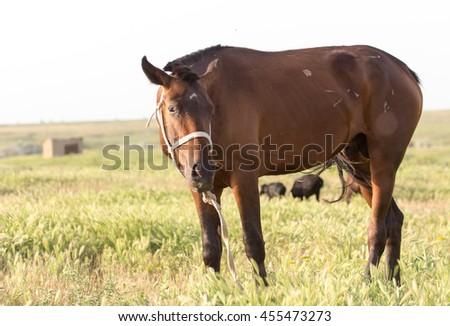 horse on pasture - stock photo