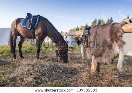 Horse on pasture near wooden fence with wolf skin on it - stock photo