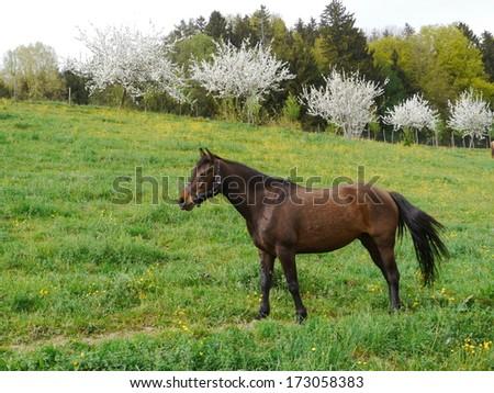 Horse on the prairie - stock photo