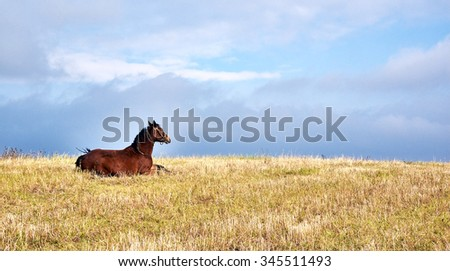 Horse pastures at the green grass meadow  - stock photo