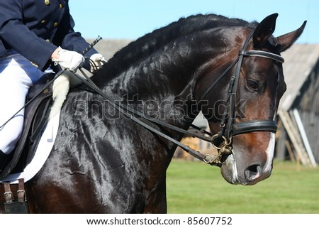 Horse portrait during equestrian show - stock photo