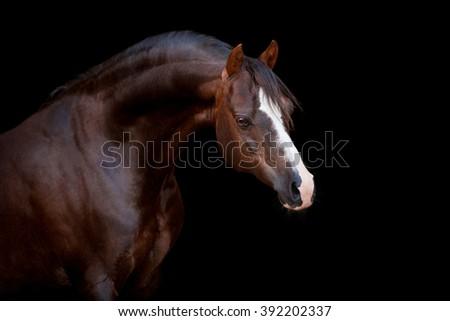 Horse portrait isolated on black background - stock photo