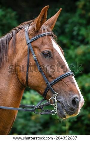 Horse profile - stock photo