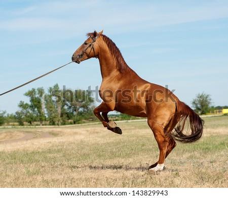 horse rear - stock photo