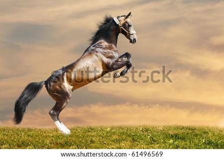 horse rears - stock photo