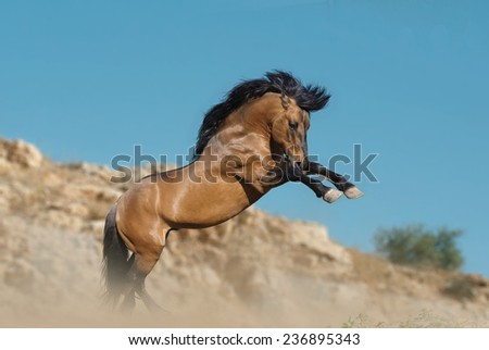 horse rears up in mountains - stock photo