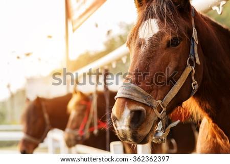 Horse riding - stock photo