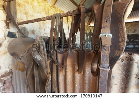 Horse riding equipment hanging on a rustic barn wall. - stock photo