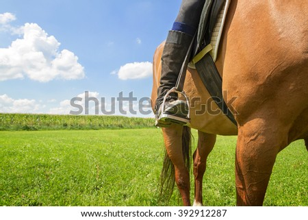 Horse riding on a field - stock photo