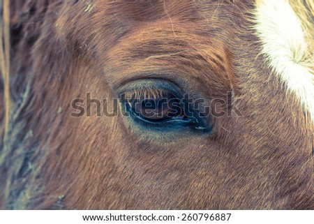 Horse right eye with shallow depth of field and cross processing - stock photo