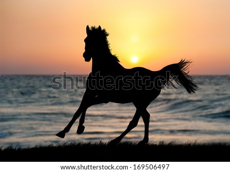 Horse running during sunset with water reflection - stock photo