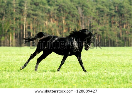 Horse running on meadow 01 - stock photo