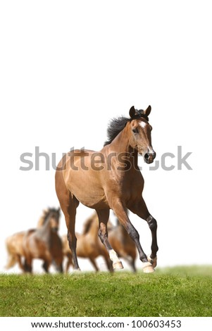 horse running with herd - stock photo