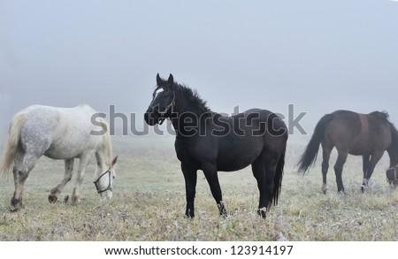 Horse runs gallop on the fog field - stock photo
