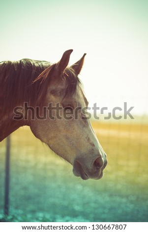 Horse's head in front of yellowish-blue background - stock photo