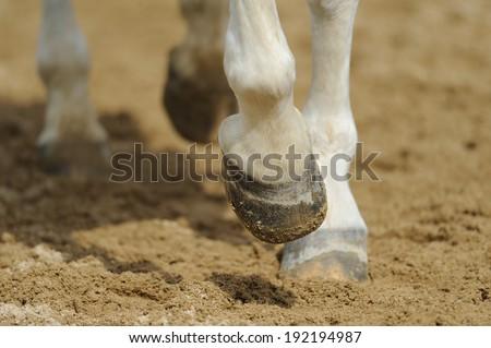 Horse's legs close up - stock photo