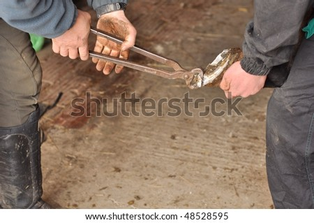 Horse Shoe Cleaning - stock photo
