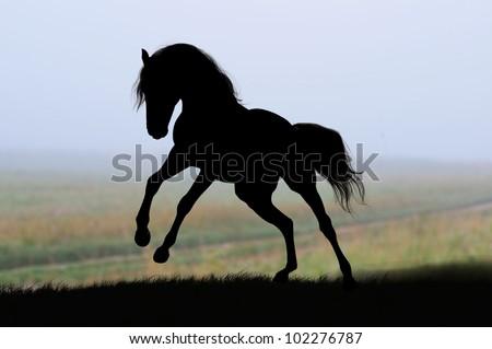 horse silhouette on sunrise - stock photo
