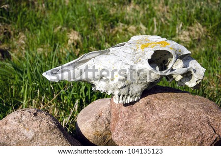 horse skull on rural garden stone - stock photo