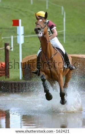 Horse splashing through water - stock photo