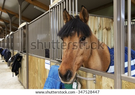 Horse stable - stock photo
