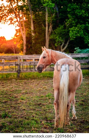 Horse standing by the fence at sunset - stock photo