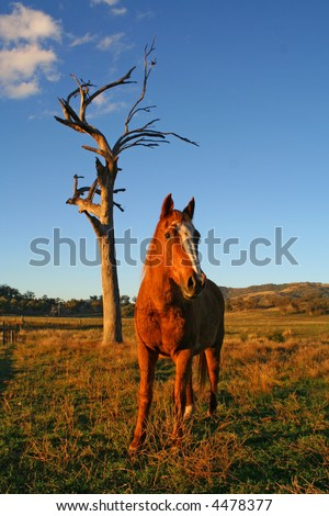 horse standing in a field - stock photo