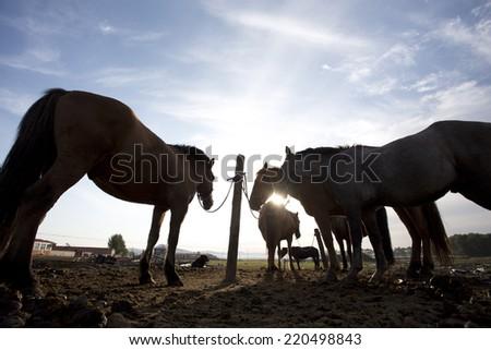 Horse standing on back light in grassland - stock photo