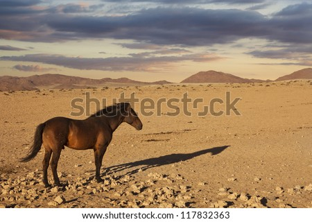 Horse stands in the desert of Namibia - stock photo