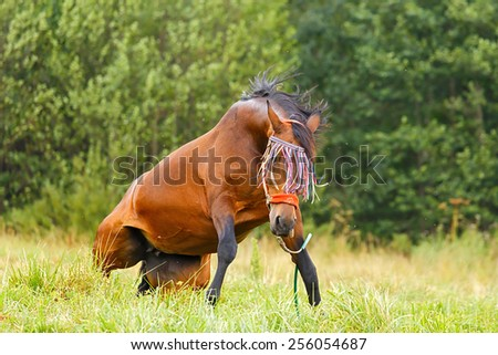 Horse stands up after having a bath in grass. - stock photo