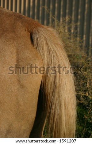 Horse Tail - stock photo